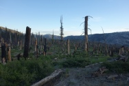 it is sad to see a burned out forest in the desert. but it is super depressing to see a burned out forest in the sierras.