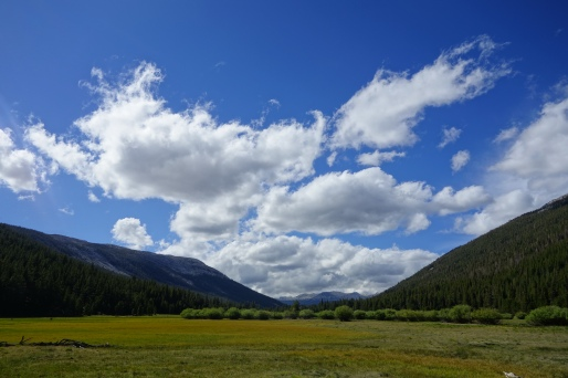 so we dropped down off of donnahue pass and had a wonderfull FLAT meadow walk for 10 miles next to a meandering creek.