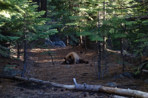 BEAR! and he isn't afraid of people. i walked by him without knowing it and came withing 20 feet of it.