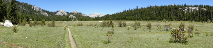 i love meadows.
