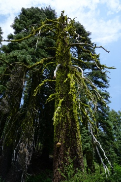 if i was a tree huger i would definitely go for this one.