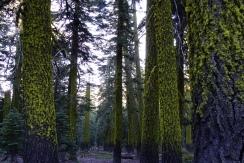 furry trees.