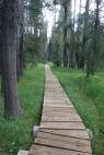 short but sweet board walk. the more i hike the more i appreciate trail work.