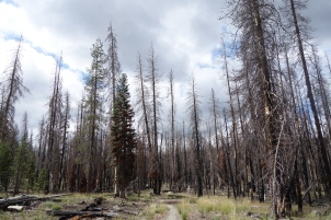 burnt out forest.