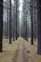 i love long strait trails.