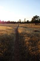 Walking through golden fields during sunset.