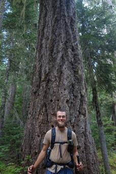 I love trees.