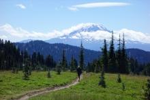 Goat Rocks Wilderness duke walking in front of Mt. Rainier.